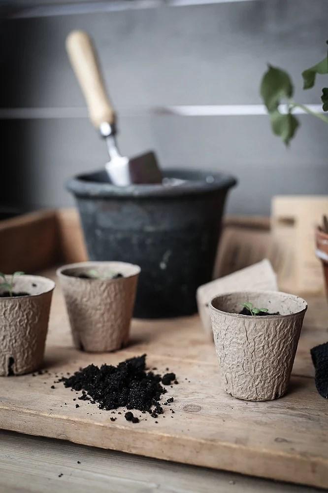 Små grönkålsplantor