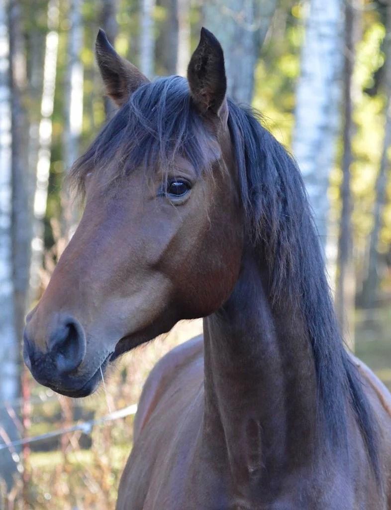 Jag kan bara hoppas att ingen såg mig, min häst och min bleka blottade röv...