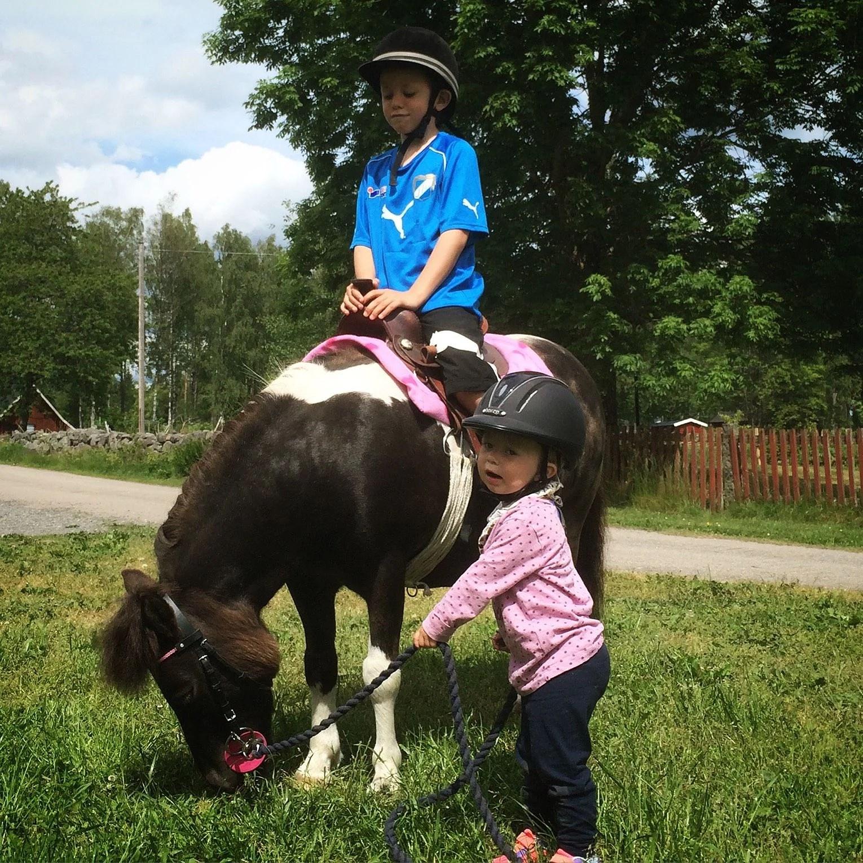 Hästarnas schema v 28
