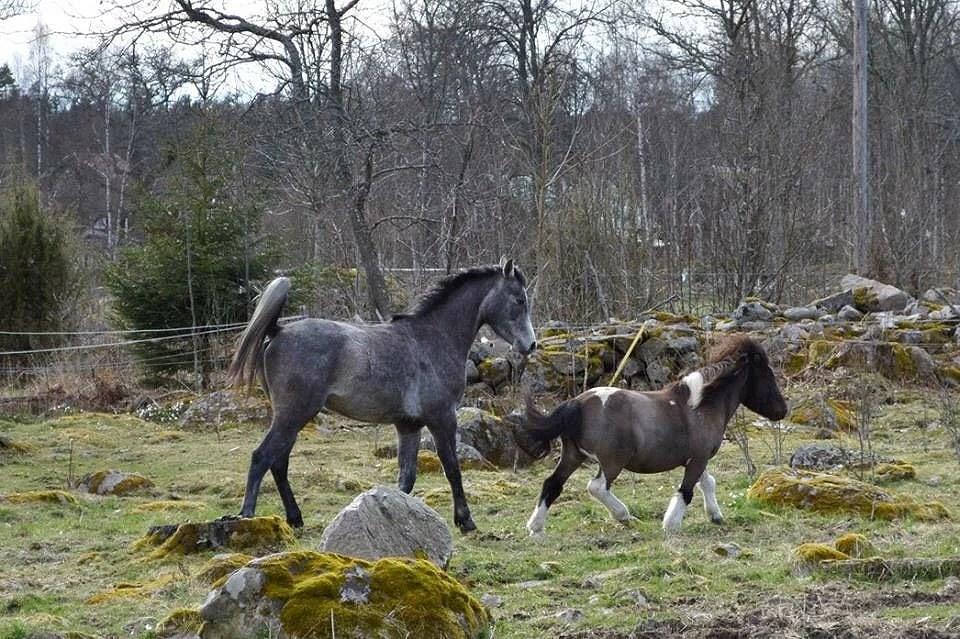 Hästarnas schema v19