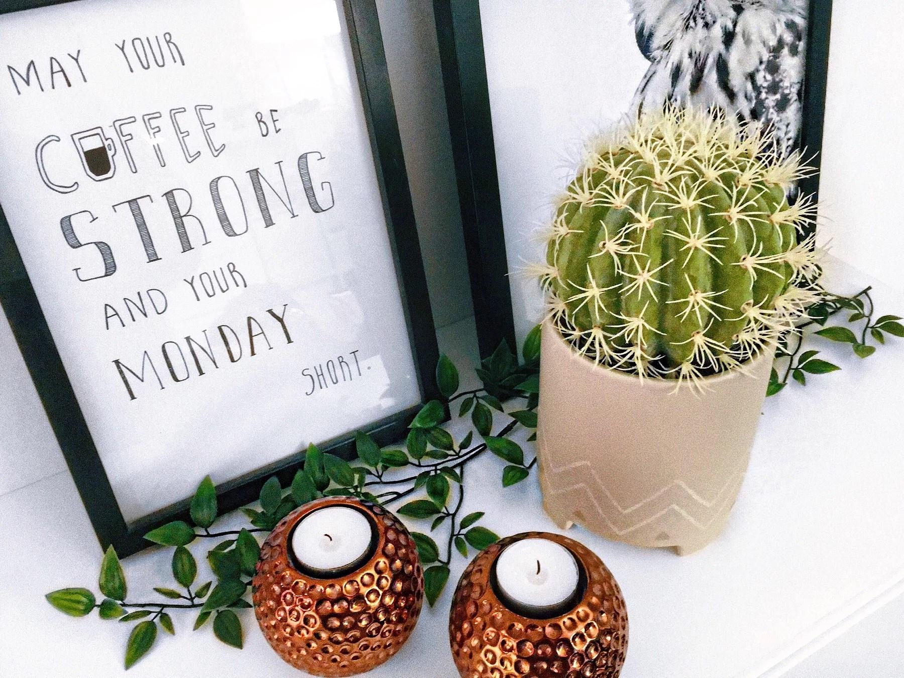 New in - kaktus