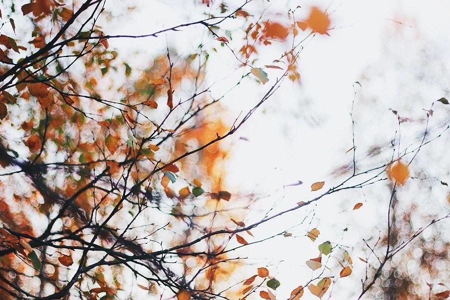 Blir lycklig av hösten.